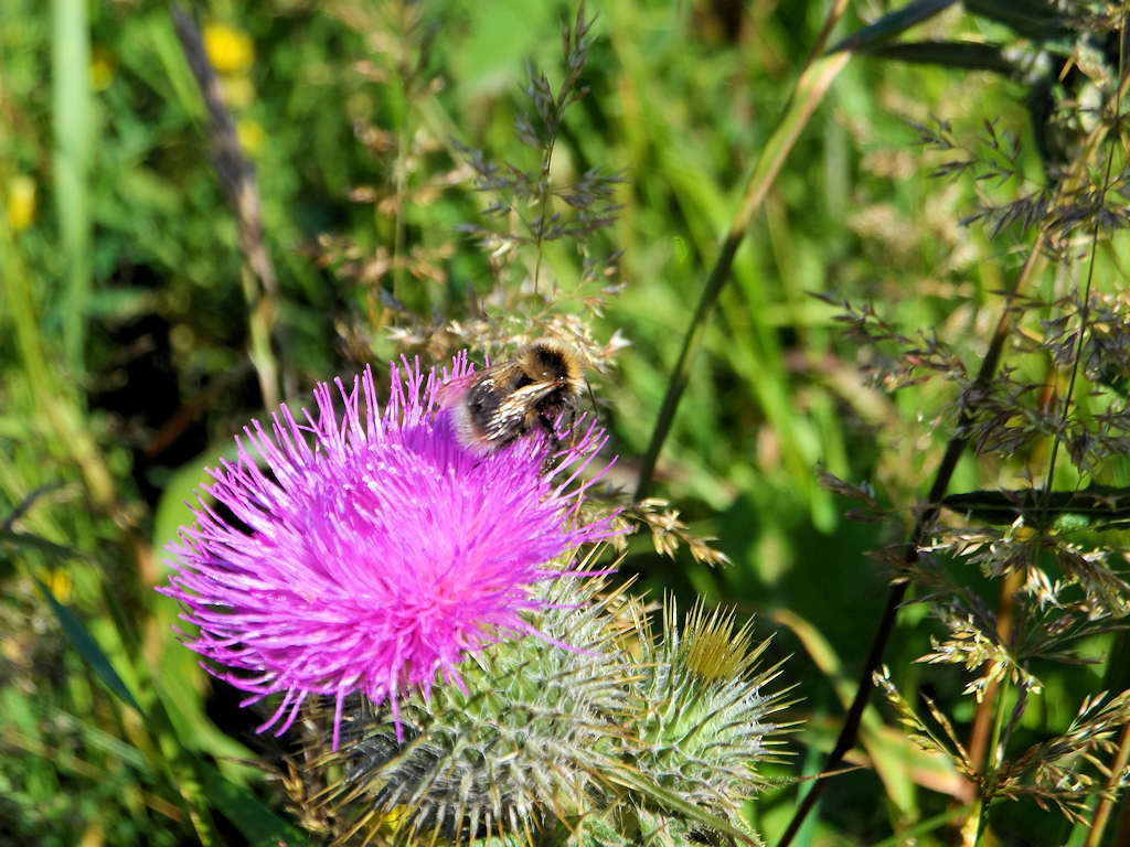 Photo: Thistle, March Road