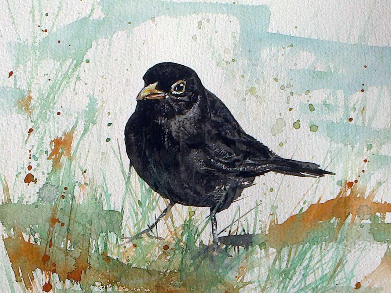 Photo: Blackbird - Elaine Rapson-Grant