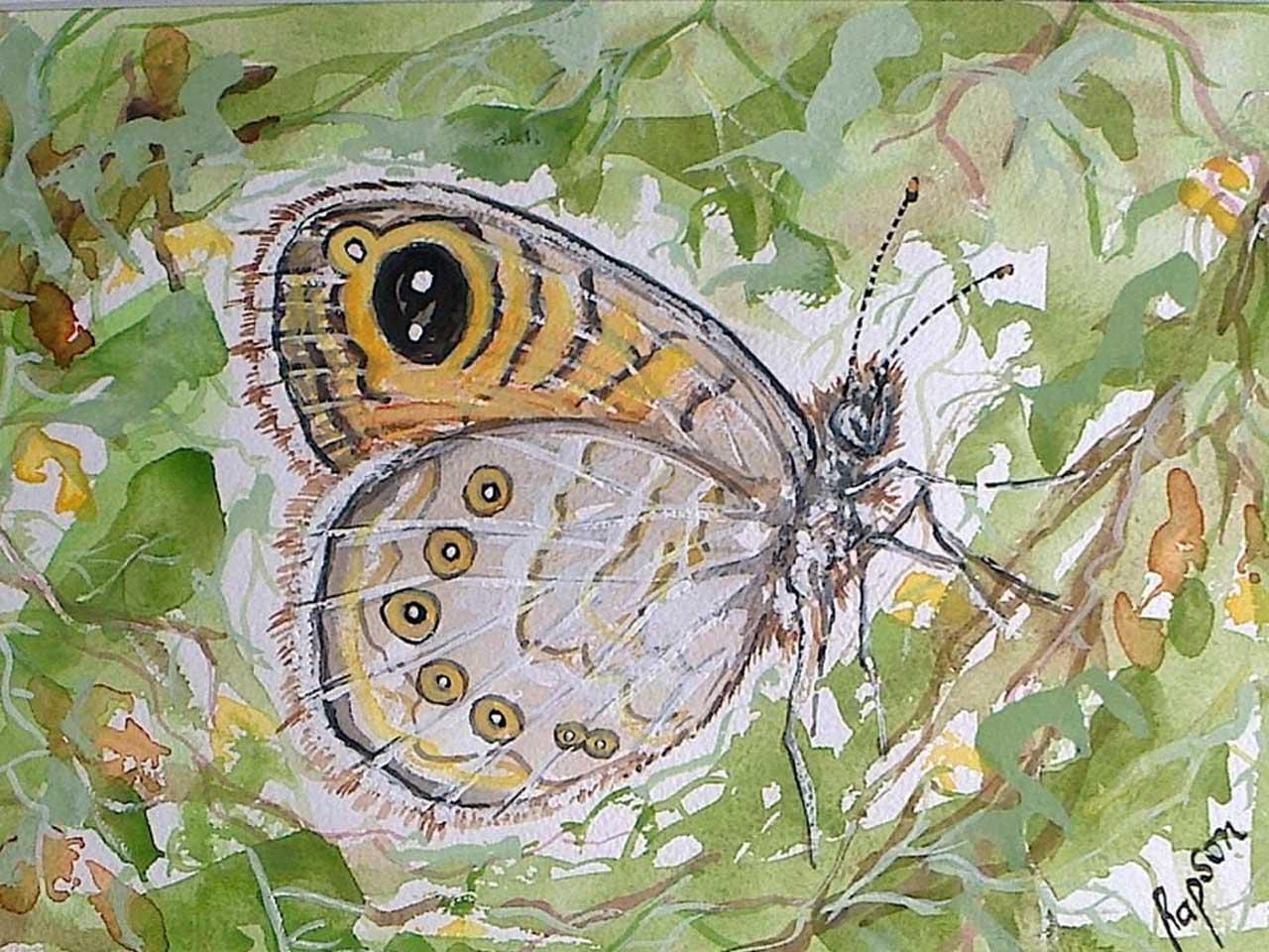 Photo: Butterfly Effect - Elaine Rapson-Grant