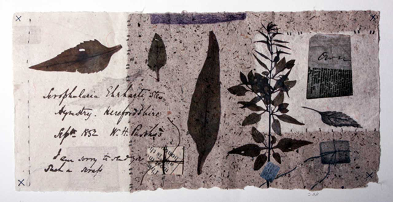Photo: Joanne B Kaar - 7 Paper Wrappers With Herbarium Sheets