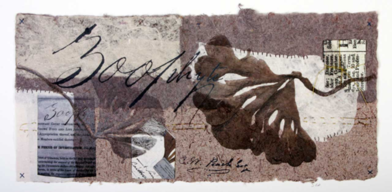 Photo: Joanne B Kaar - 8 Paper Wrappers And Herbarium Sheets
