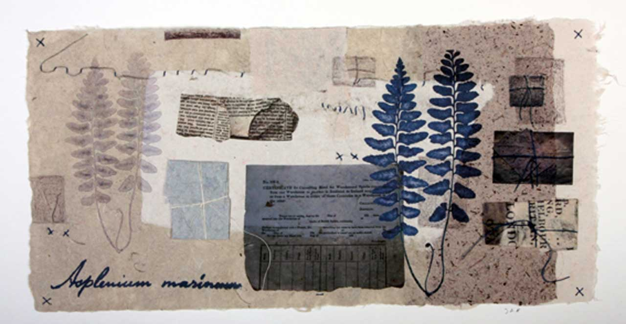 Photo: Joanne B Kaar - 11 Paper Wrappers And Herbarium sheets