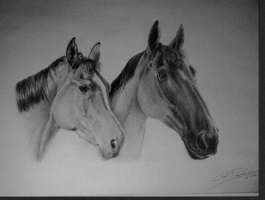 Photo: Horses