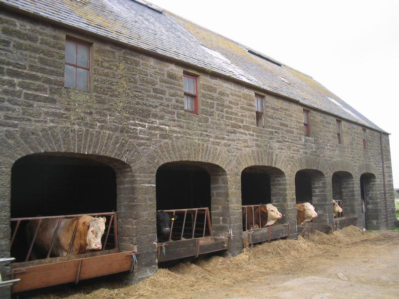 Photo: Ackergill Mains Farm