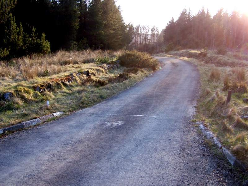 Photo: Rumster Forest Roads