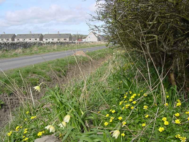 Photo: Tannach Road Springtime