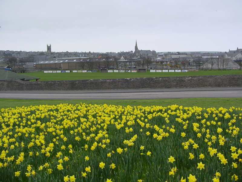 Photo: Thurso Daffodils