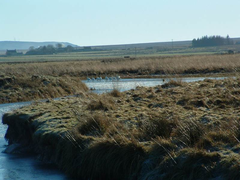 Photo: Thurso River - Early Morning - 31 January 2006