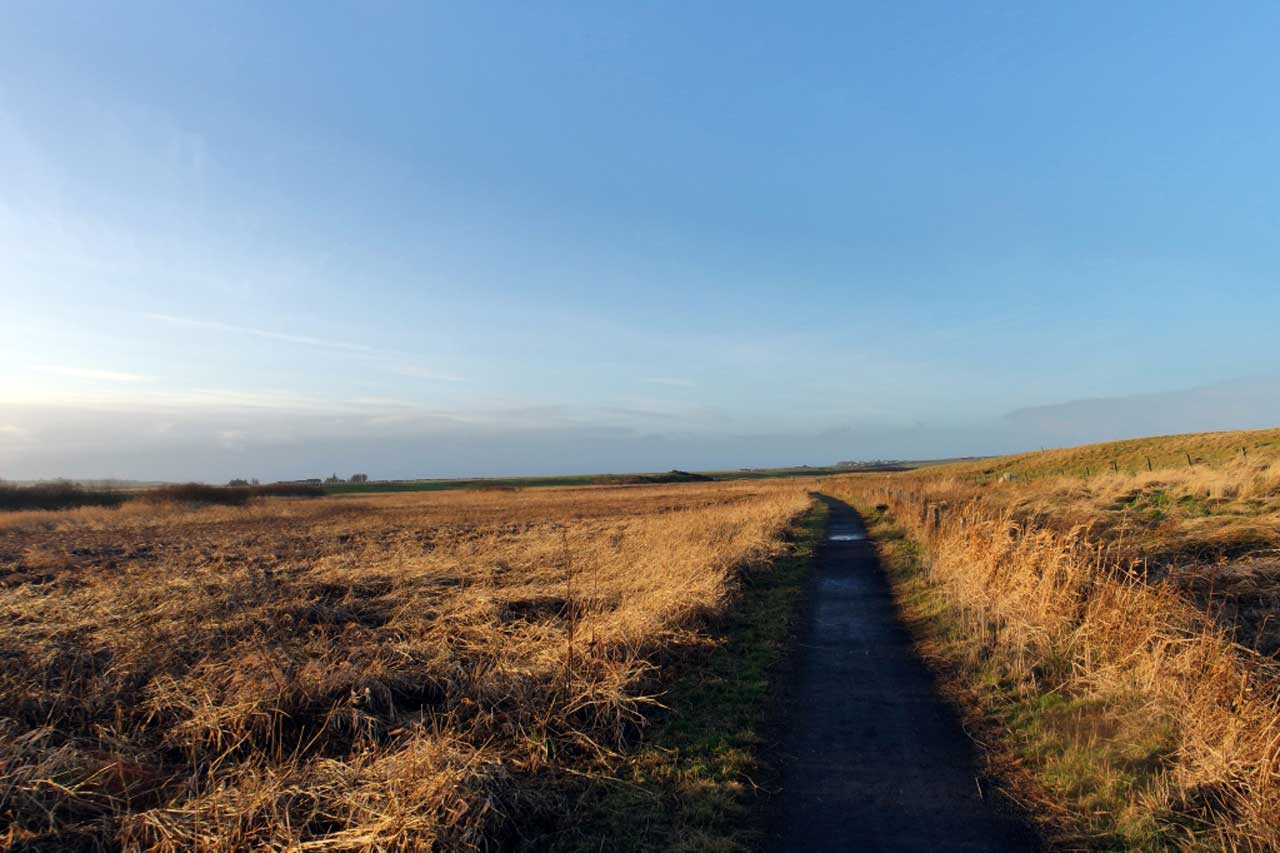 Photo: River Wick Walk - 3 January 2017