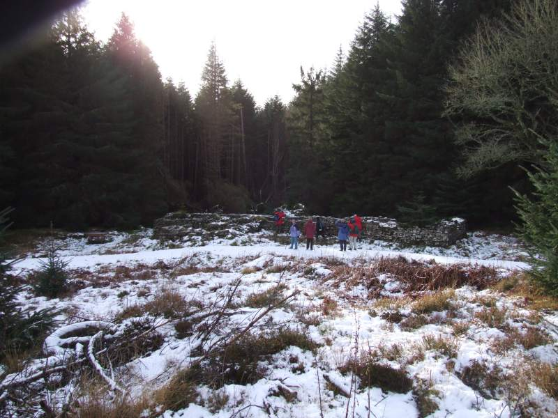 Photo: Golsary - Rumster Forest 21 January 2007