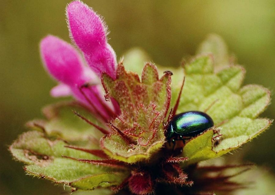 Photo: Bug - Megan Coghill