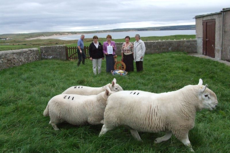 Photo: The Sheep At Dunnet