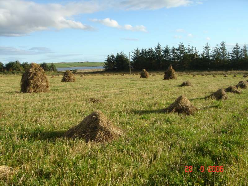 Photo: Barley Stooks At Brough, Caithness - A Rare Site These Days