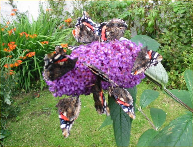 Photo: Bumper Year For Butterflies, Bees & Bugs in Caithness