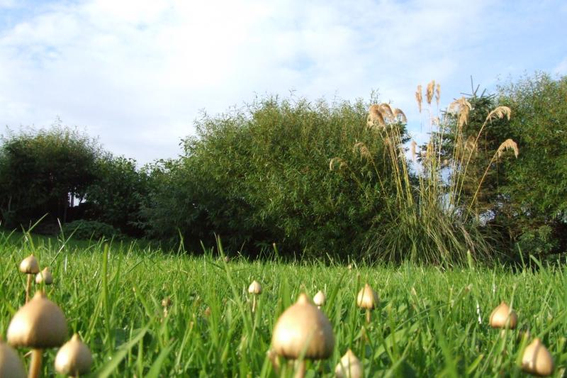 Photo: Fungi In Caithness