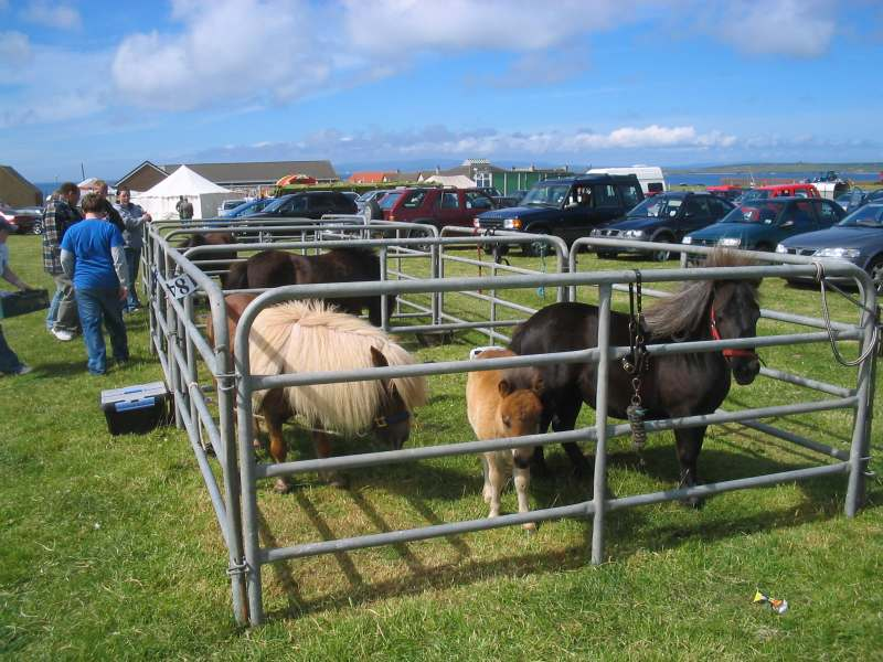 Photo: Canisbay Show 2007