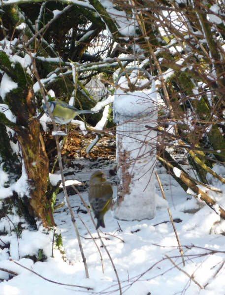 Photo: Snow In Watten