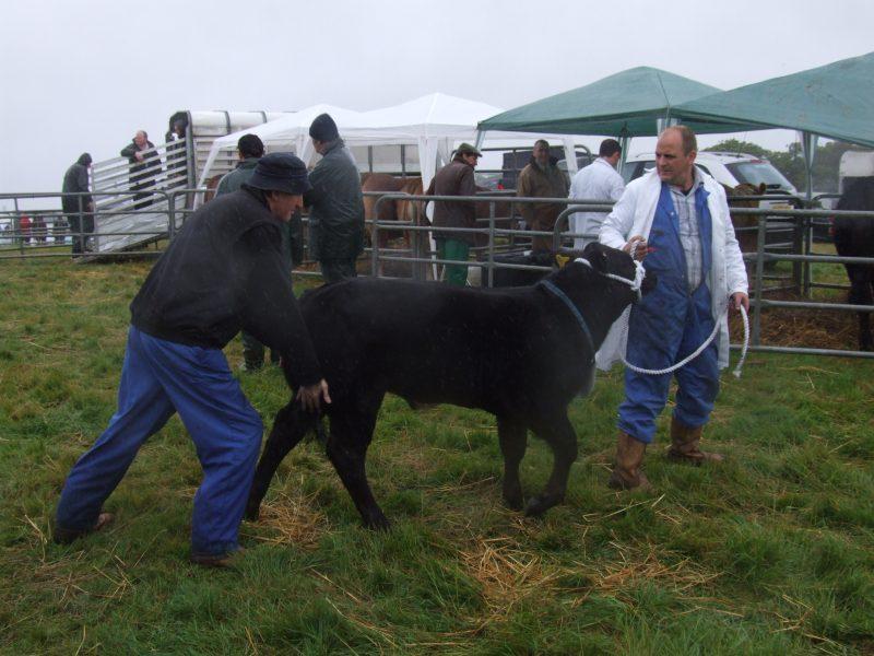 Photo: Caithness County show 2009