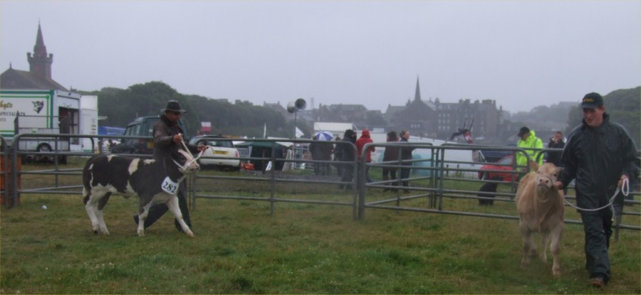 Photo: Caithness County show 2009