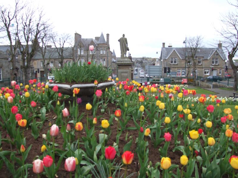 Photo: Tulips Bring A Splash Of Colour To Thurso