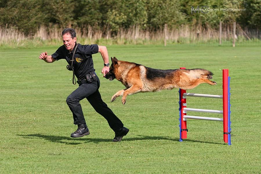 Photo: Labrador Retriever Rescue Fun Day