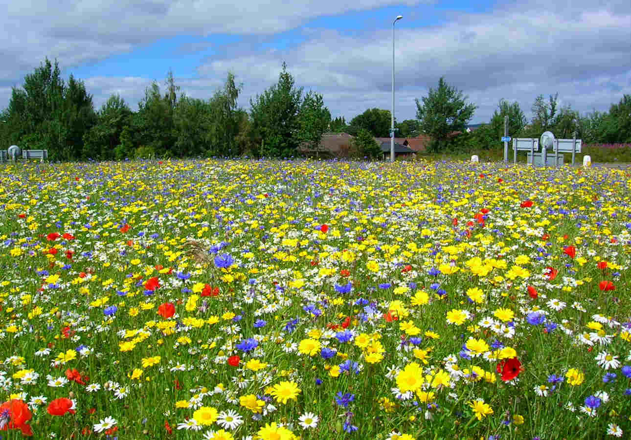 Photo: A Highland Council Roundabout Last Summer