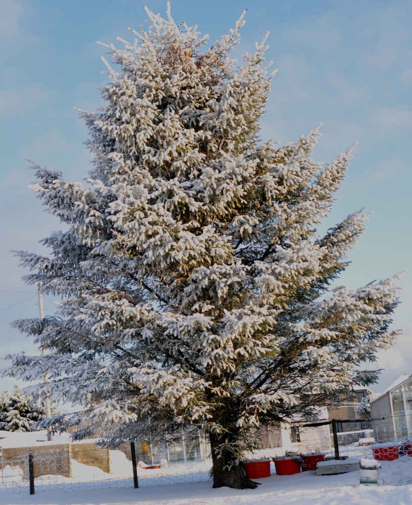 Photo: Tree In A Wick Garden Shows Winter Is Definitiely Here