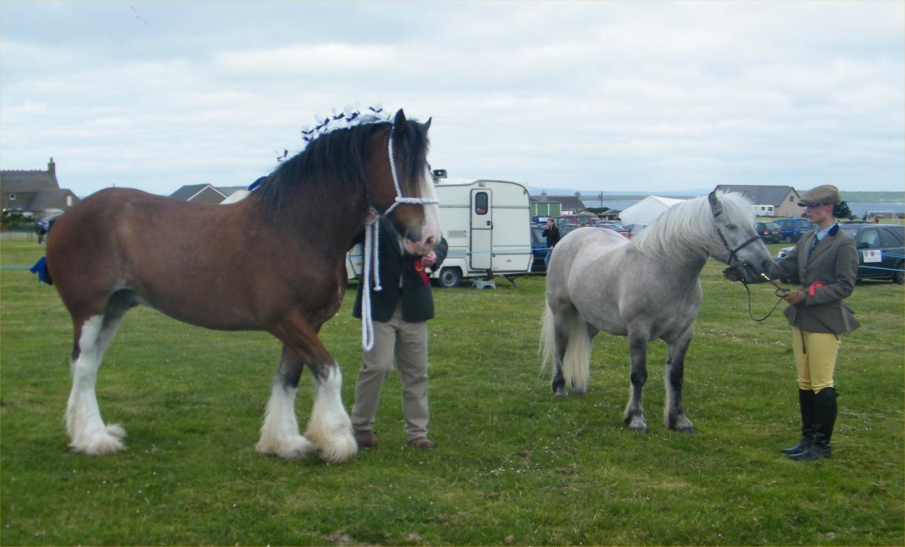 Photo: Canisbay Show 2010