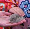 Bower Gala 2011 - Pets