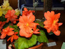 Reay Horticultural Show 2011