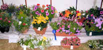 Caithness County Show 2011 - Flower Show