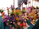 Flower Tent At Caithness County Show 2012