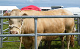 Canisbay Show 2012