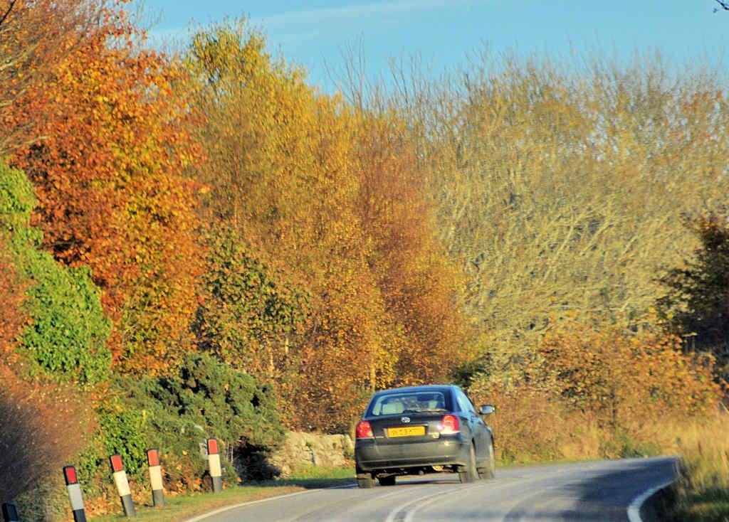 Photo: Autumn Days Now Fading