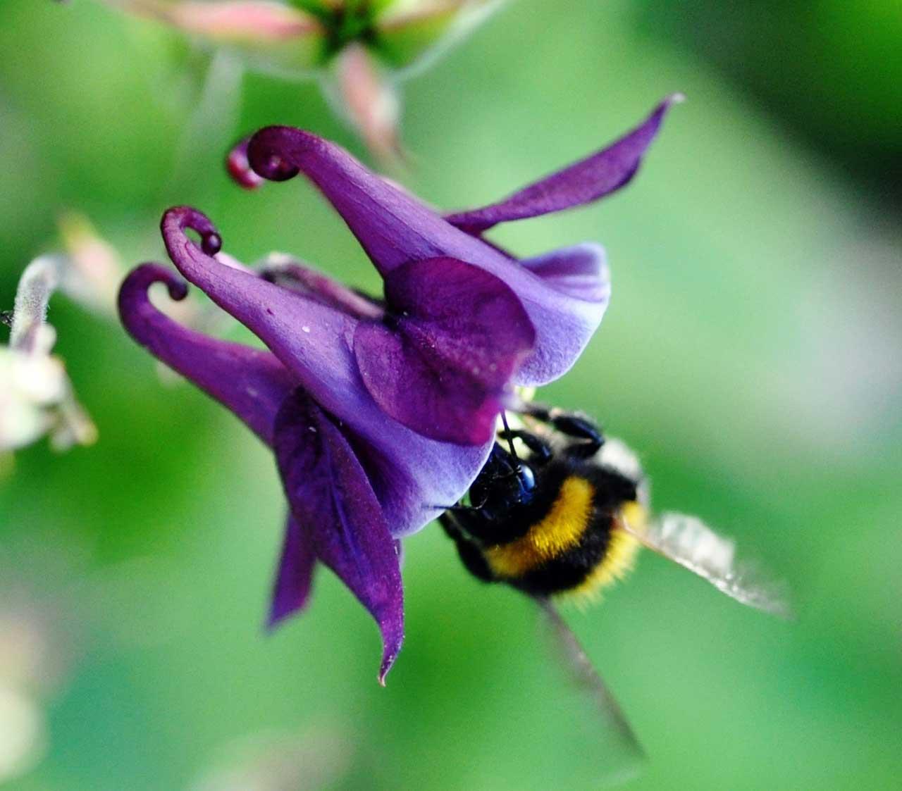 Photo: Bee-utiful
