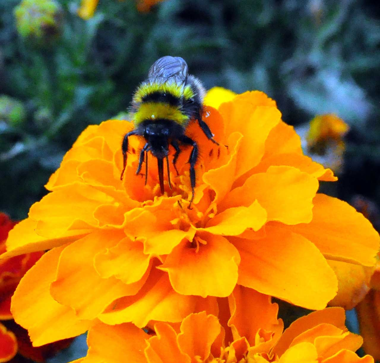 Photo: Bee-utiful