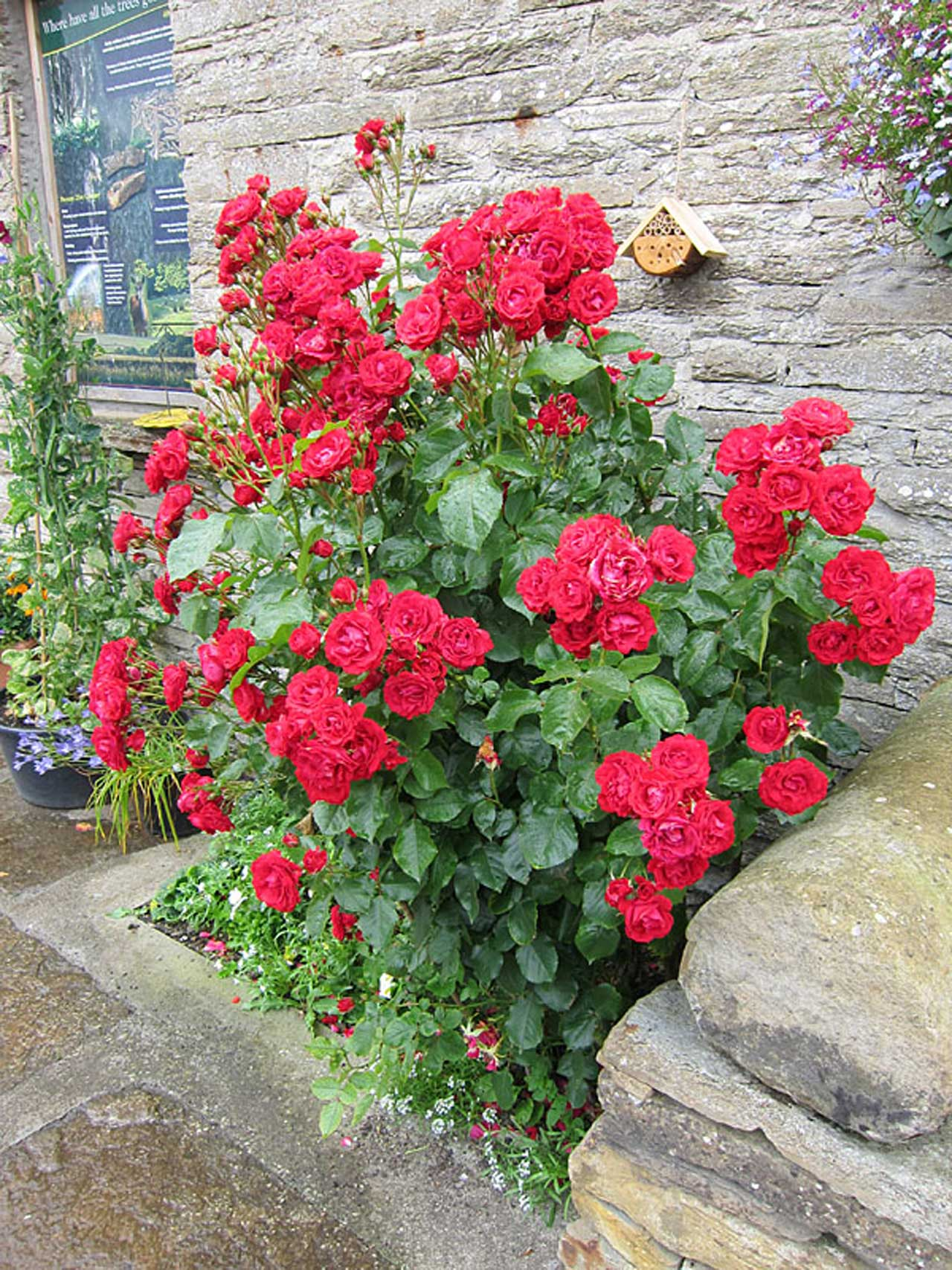 Photo: Castlehill Heritage Garden In Full Bloom
