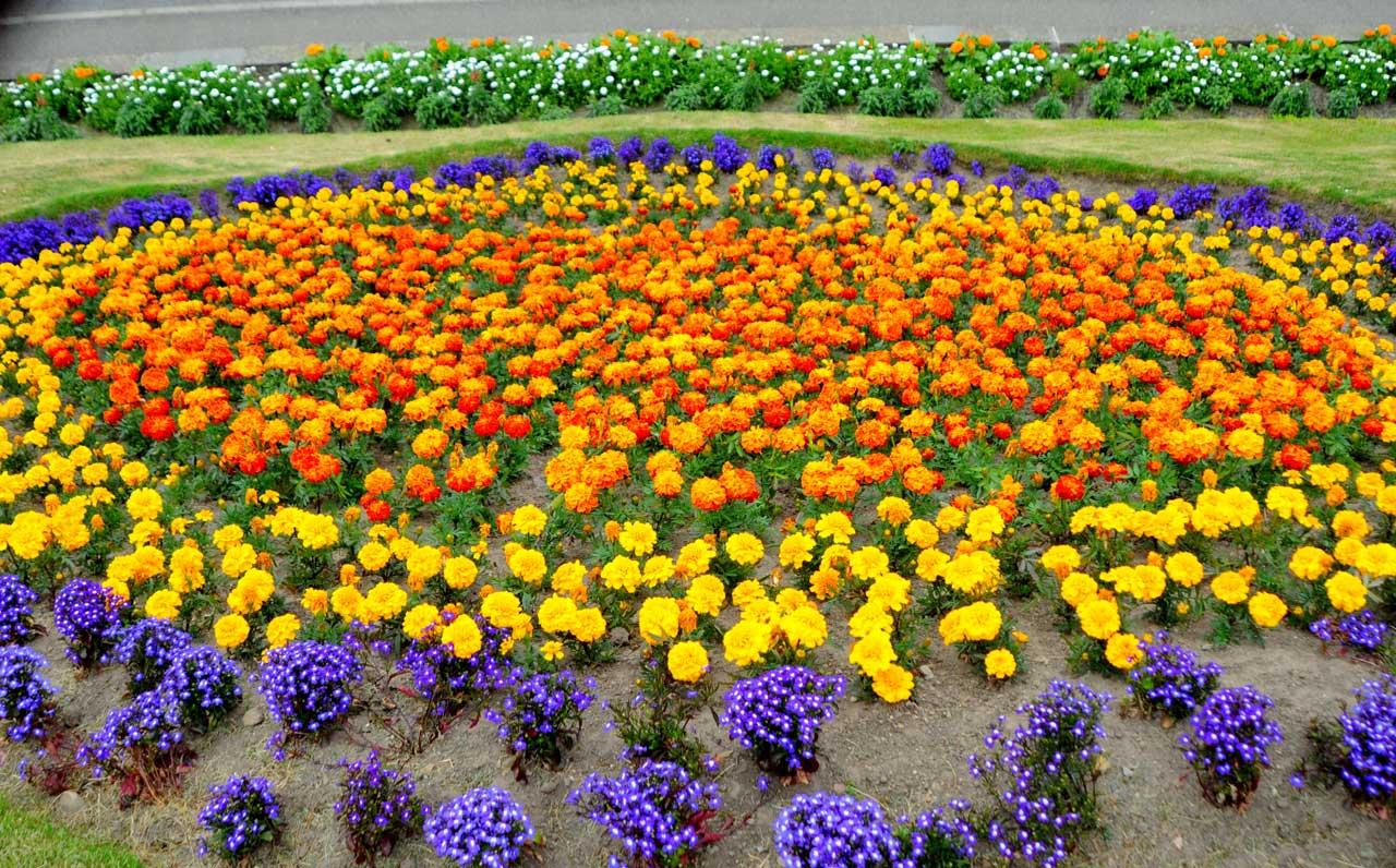 Photo: Floral Displays At Kirkhill, Wick