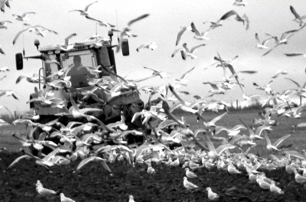 Photo: Gulls Always Turn Up Fast For A Free Meal