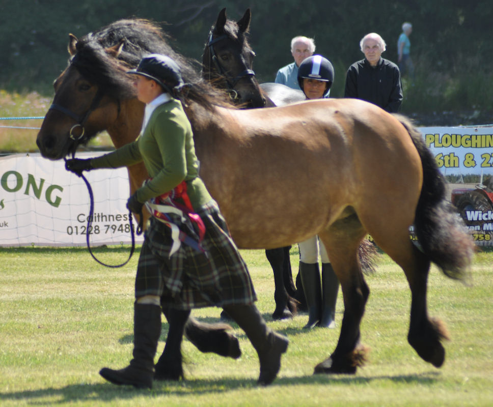 Photo: Caithness county Show 2013 - Champions