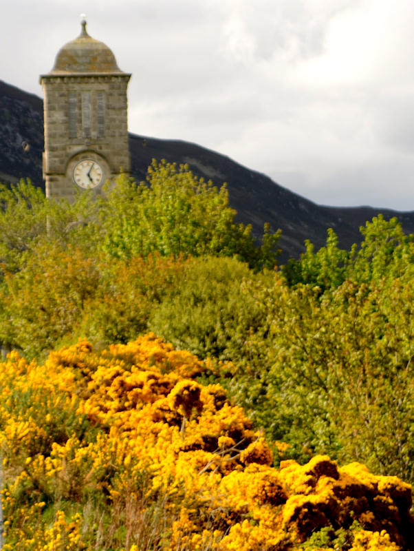 Photo: Gorse In Spectacular Yellow