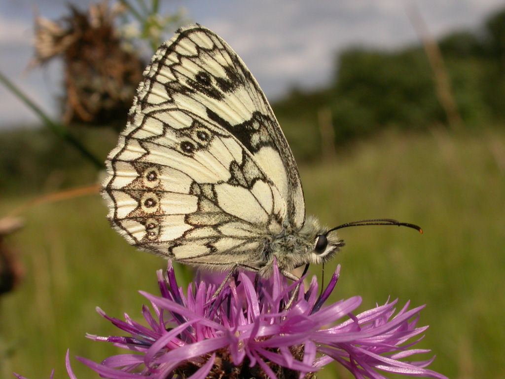 Photo: Marbles White Butterfly