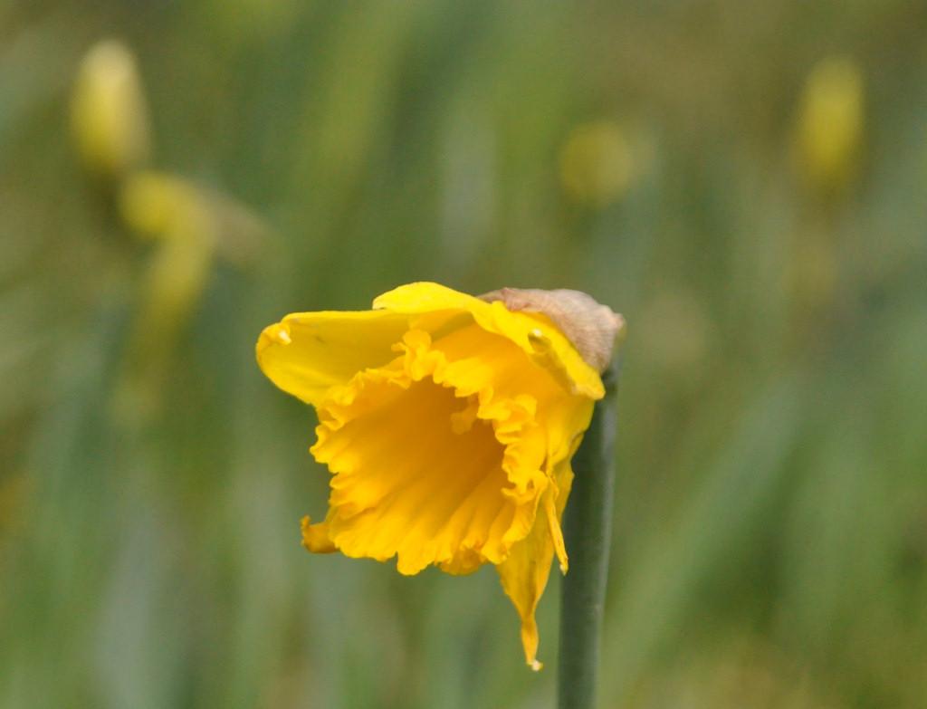 Photo: Springtime Arrived In Caithness