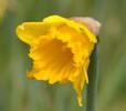 Springtime in Caithness