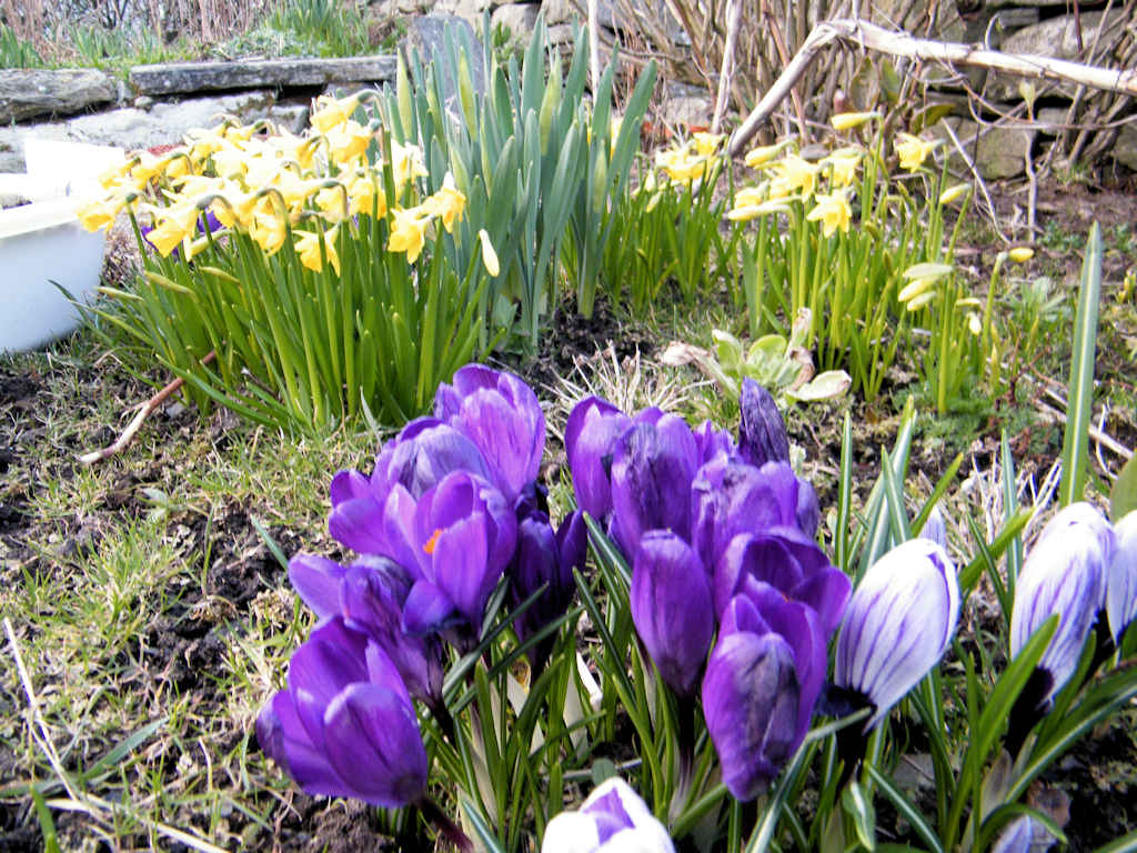 Photo: Springtime Arrived In Caithness