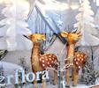Flower Shop Christmas 2013