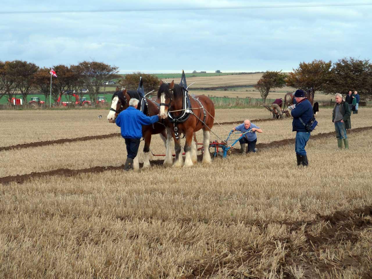 Photo: 51st Scottish Ploughing Championships 2013 - Stanstill Farm, Caithness