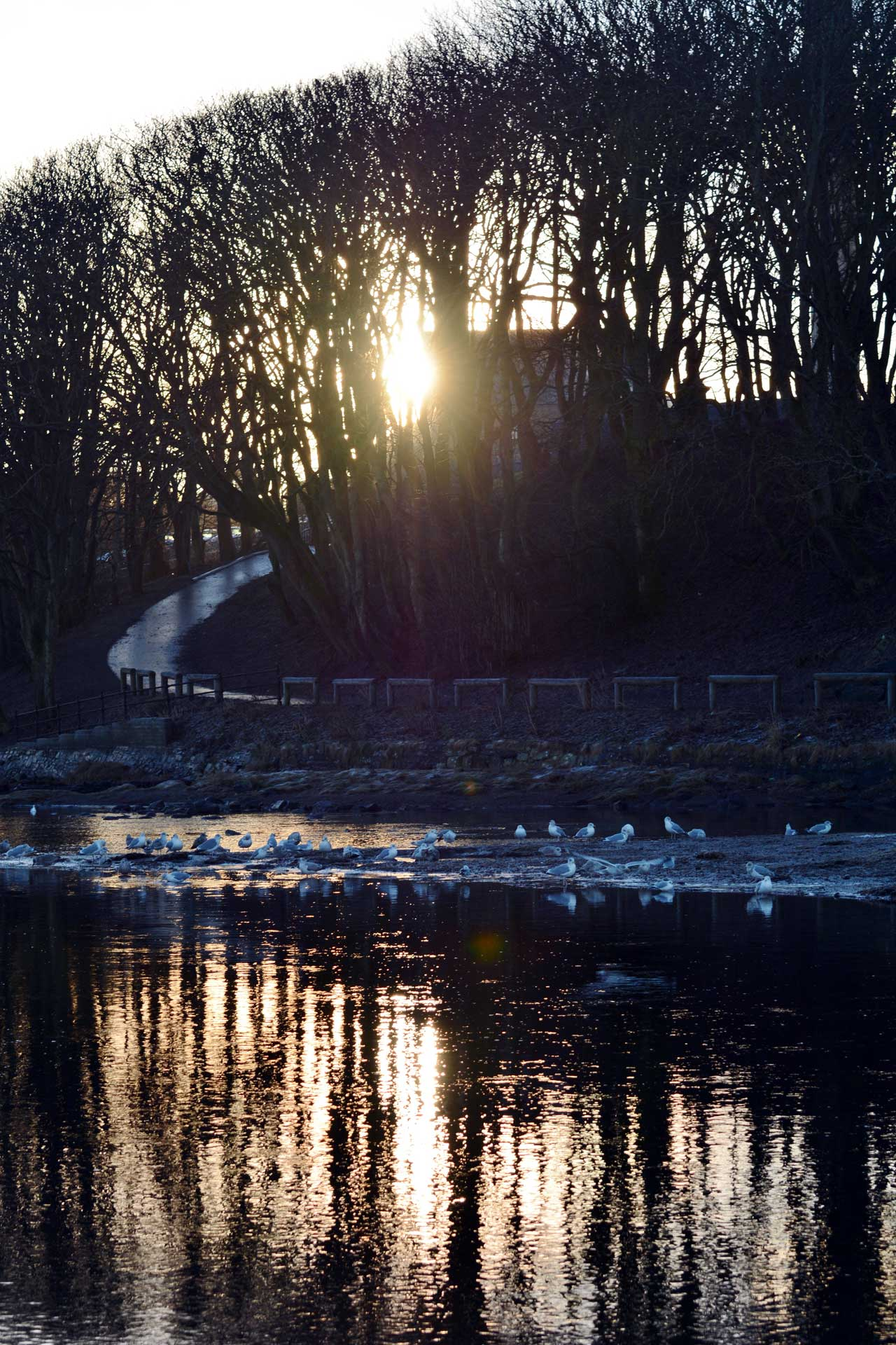 Photo: Frosty River Walk At Wick River
