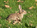 Rabbits at Ellens Geo