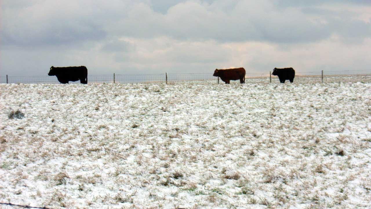 Photo: Wick Freezes On Saturday
